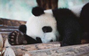 7-trucos-de-Pandas-con-aplicaciones