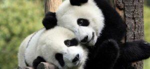 Jugando con fechas y vacaciones en Python usando Pandas
